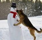 Dog biting snowman