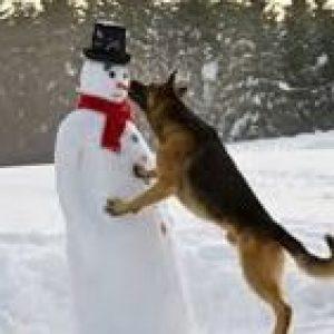 Dog-biting-snowman